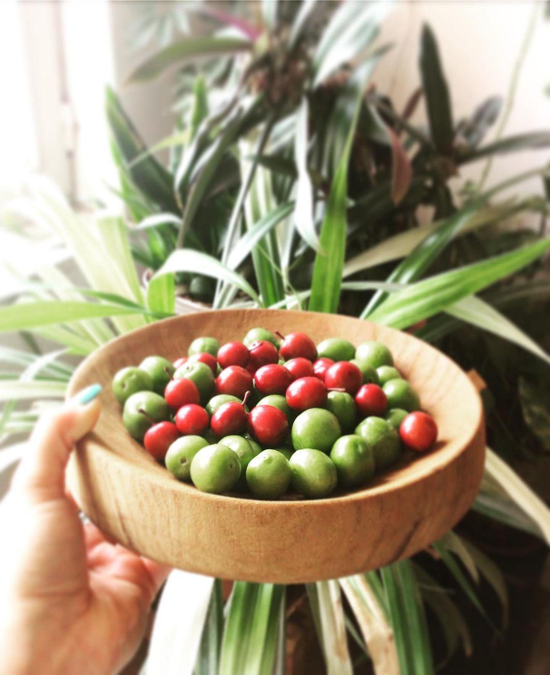 استوری اینستاگرام عکس گوجه سبز و آلبالو