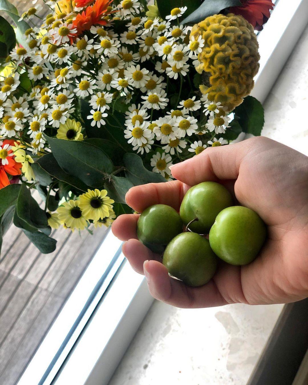 میوه نوبرونه گوجه سبز
