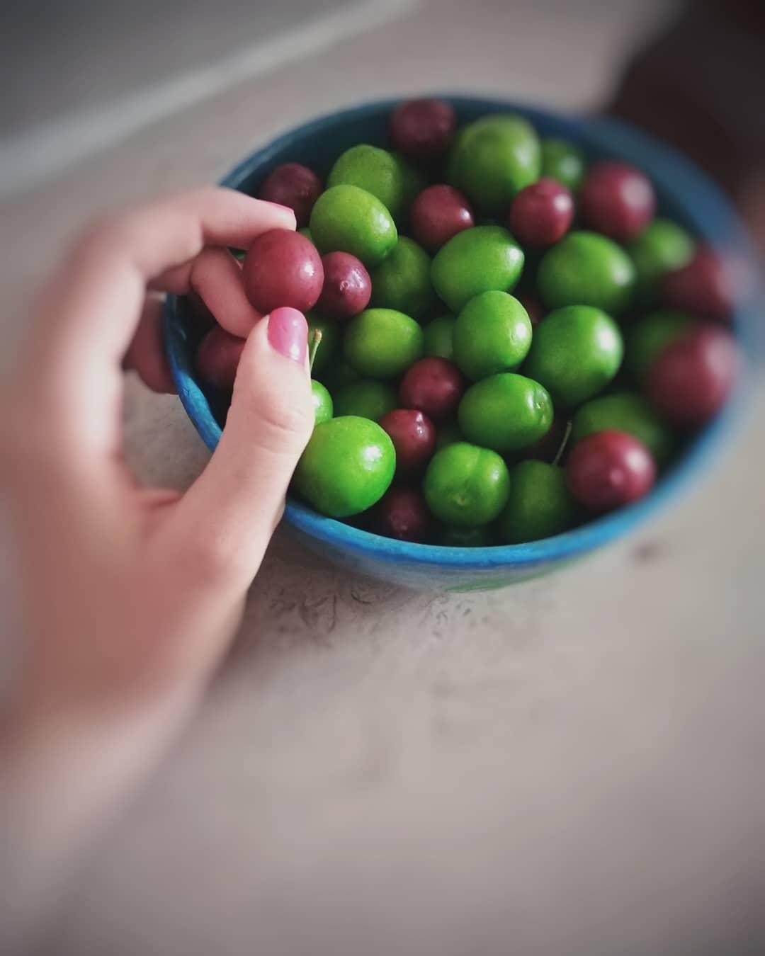 میوه های نوبرونه گوجه سبز