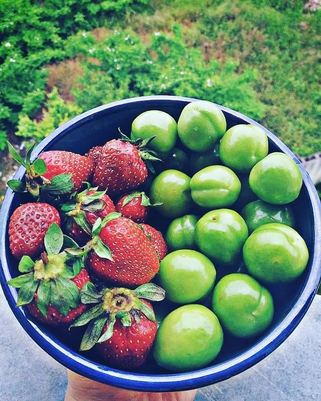 گوجه سبز و توت فرنگی