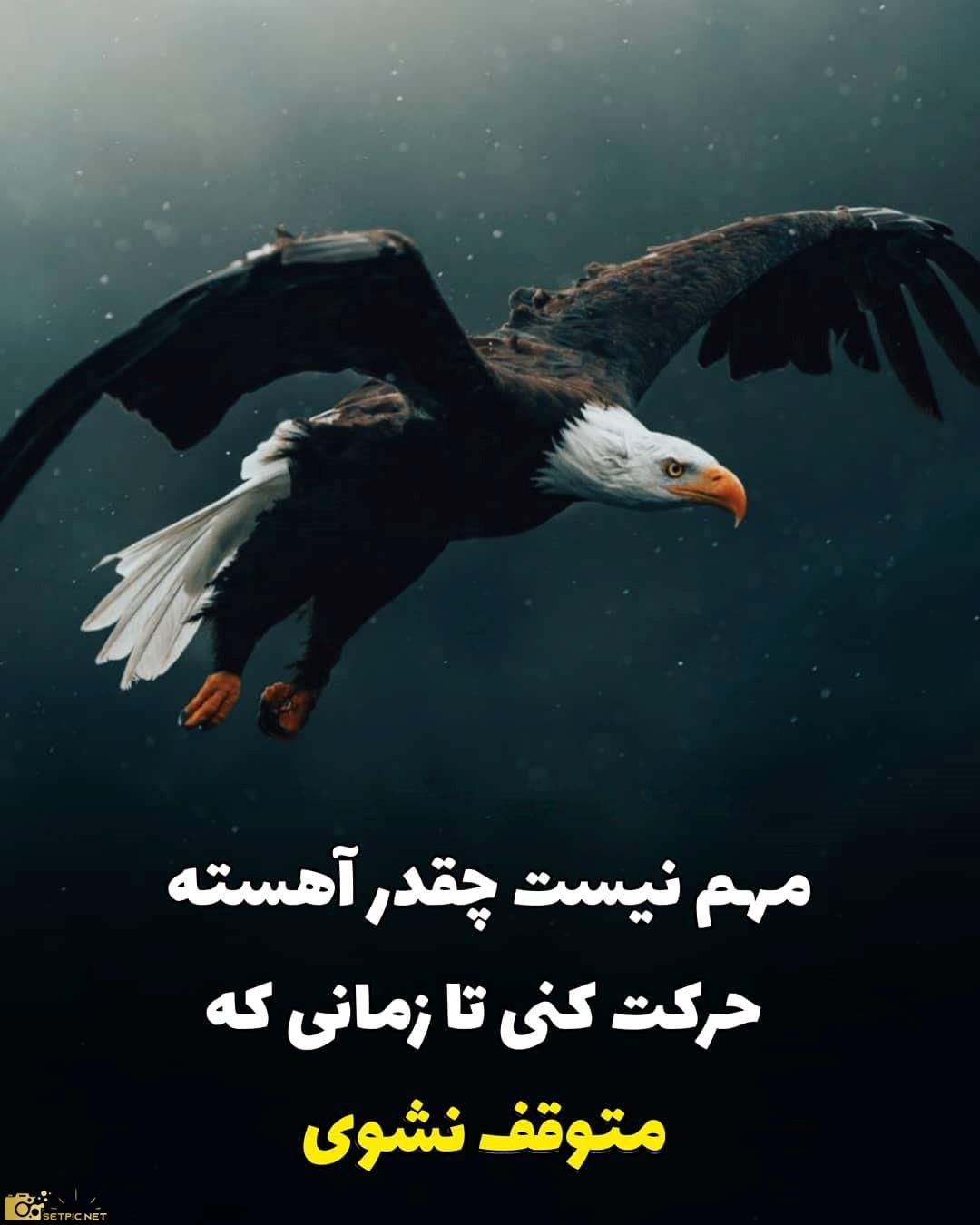 استوری انگیزشی عقاب