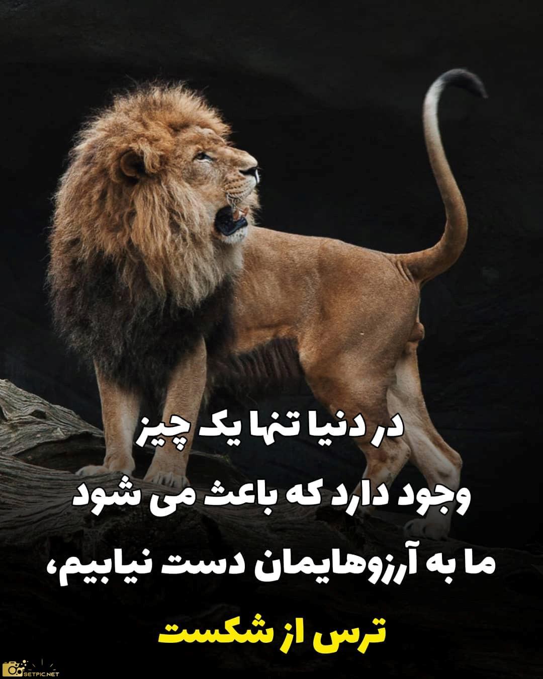 عکس نوشته انگیزشی خفن با تصویر شیر